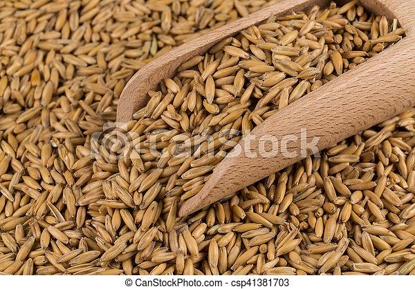 natural oat grains background, closeup - csp41381703