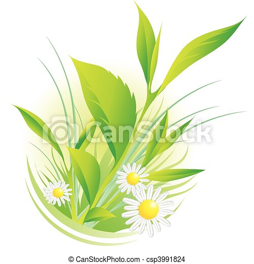 natural plants and chamomile - csp3991824