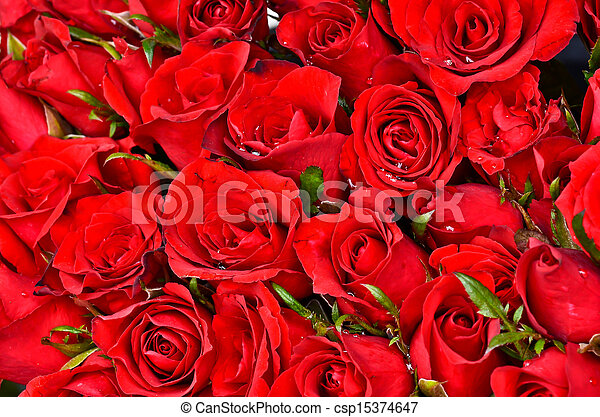 Natural red roses background - csp15374647