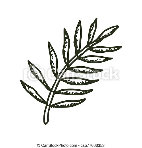 Natural Tropical Leaves Vector Logo Template Illustration Eps 10 Vector set of tropical palm leaves, black silhouettes isolated on white background. can stock photo