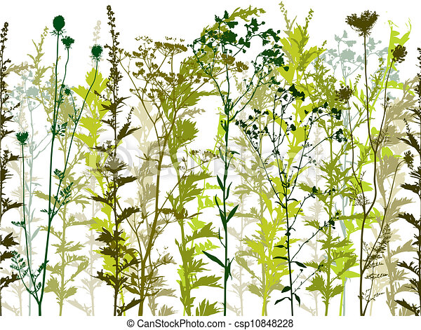 Natural wild plants and weeds. - csp10848228
