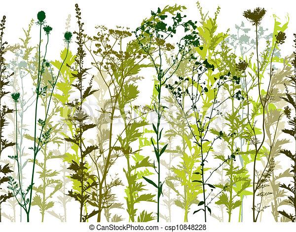 Natural wild plants and weeds. - csp10848228