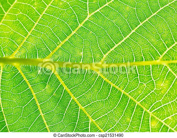 Naturale Albero Noce Sfondo Verde Foglia Naturale Albero Su