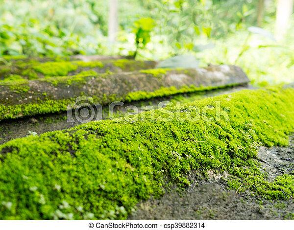 Naturale muschio natura struttura piastrella verde tetto