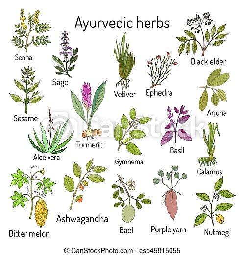 naturale, set, botanico, ayurvedic, erbe - csp45815055