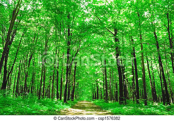 naturaleza - csp1576382