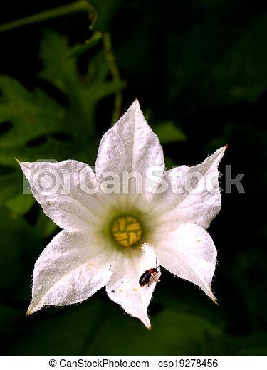 La selección de varias flores coloridas en la naturaleza - csp19278456
