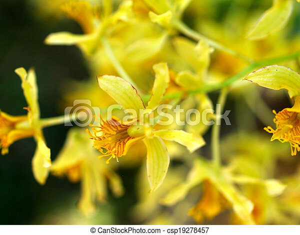 La selección de varias flores coloridas en la naturaleza - csp19278457