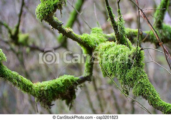 Nature Abstract - csp3201823