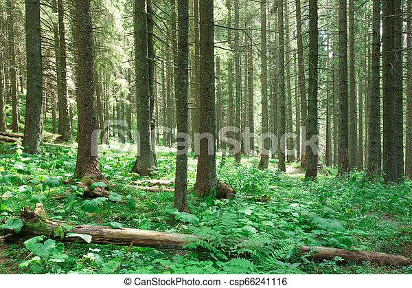 nature, arbres., arrière-plans, lumière soleil, bois, forêt verte - csp66241116