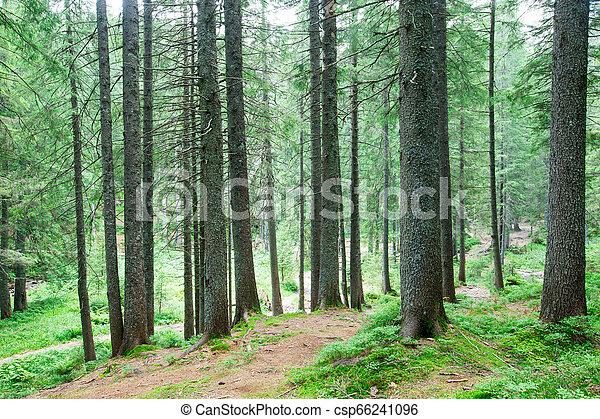 nature, arbres., arrière-plans, lumière soleil, bois, forêt verte - csp66241096