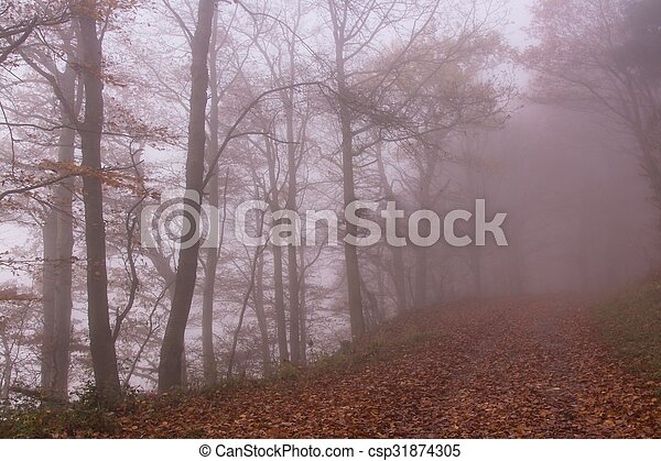 Nature Autumn Colorful Misty Forest