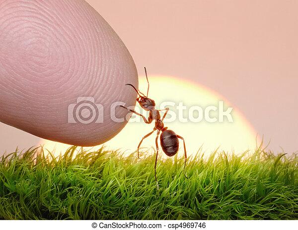 nature, -, fourmi, humain, doigt, amitié - csp4969746