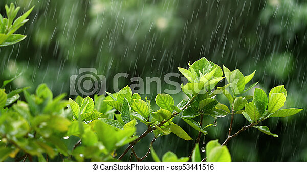 nature fresh green leaf branch under havy rain in rainy season