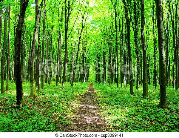 nature - csp3099141