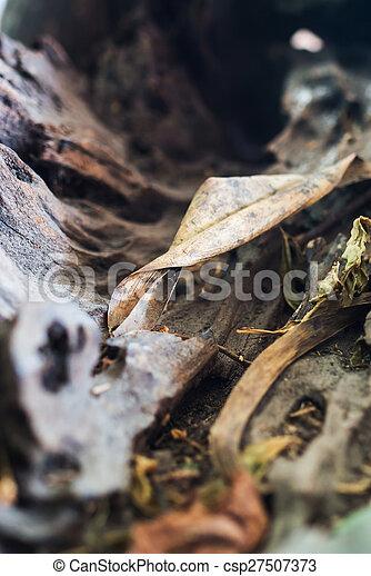 Nature Leaf die in soft light . - csp27507373