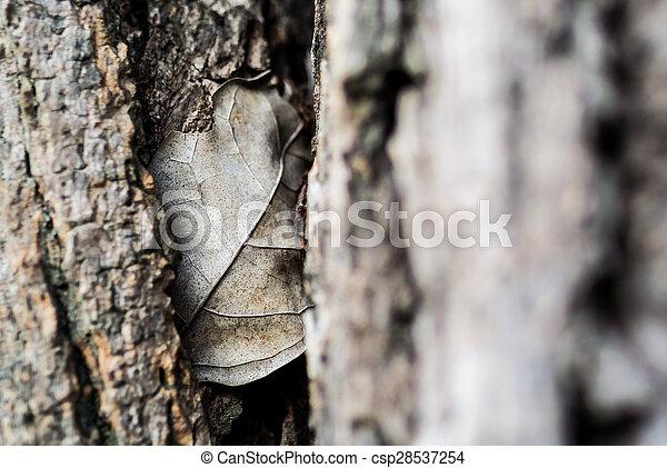 Nature Leaf die in soft light . - csp28537254