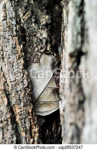 Nature Leaf die in soft light . - csp28537247
