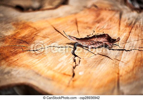 Nature Leaf die in soft light . - csp28936942