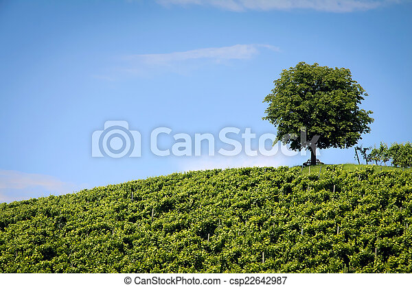 Nature Photography: Summer Landscape - csp22642987