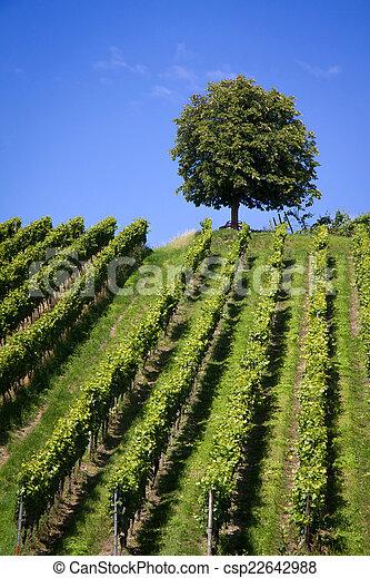 Nature Photography: Summer Landscape - csp22642988