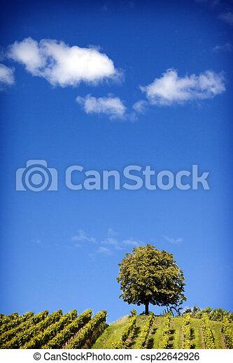 Nature Photography: Summer Landscape - csp22642926