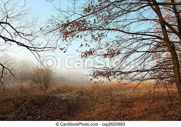 nature - csp2620683