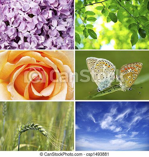 nature - csp1493881