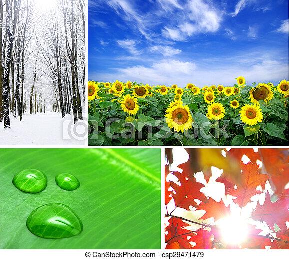 nature - csp29471479