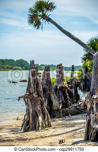 nature scenes around hunting island south carolina - csp29911750