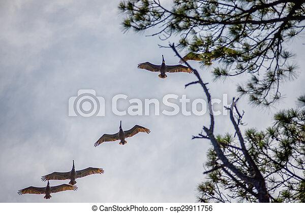 nature scenes around hunting island south carolina - csp29911756