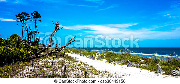 nature scenes around hunting island south carolina - csp30443156