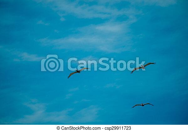 nature scenes around hunting island south carolina - csp29911723
