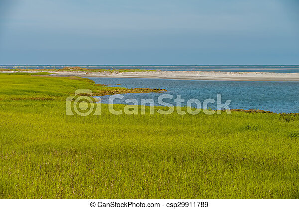 nature scenes on hunting island south carolina - csp29911789
