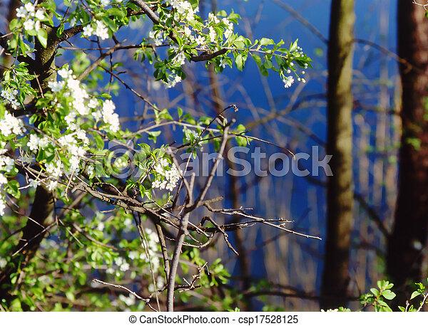 nature, - csp17528125