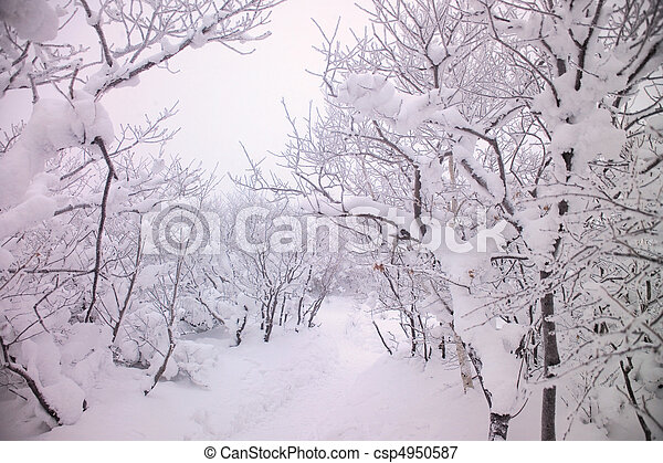 Nature View - csp4950587