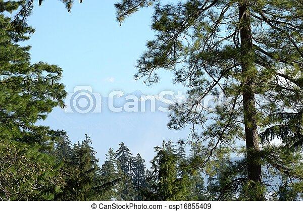Nature View - csp16855409