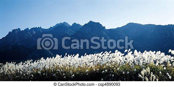 Nature View - csp4890093