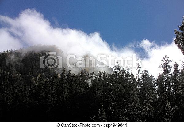 nature, vue - csp4949844