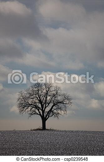 nature winter tree 01 - csp0239548
