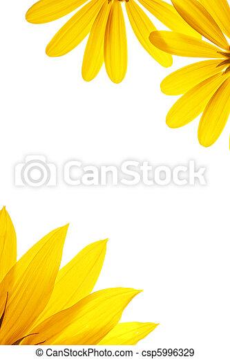 naturel, tournesol, blanc, details., vide, décoré, page - csp5996329