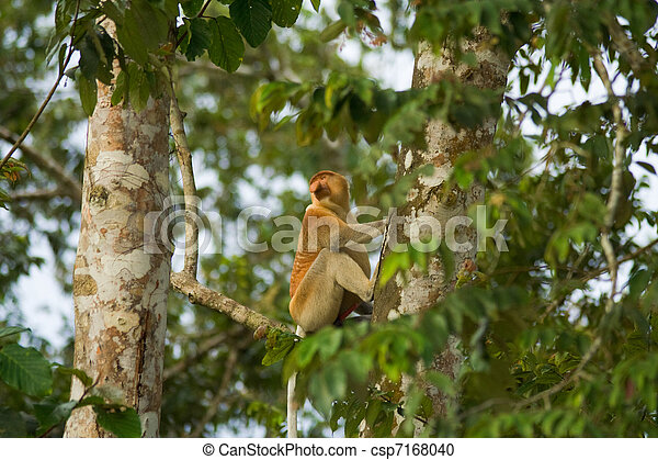 naturel trompe arbre singe habitat trompe naturel photographie de stock rechercher. Black Bedroom Furniture Sets. Home Design Ideas