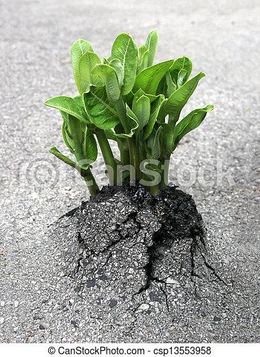 Nature's Breakthrough - csp13553958