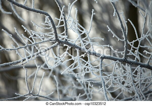 natureza inverno - csp10323512
