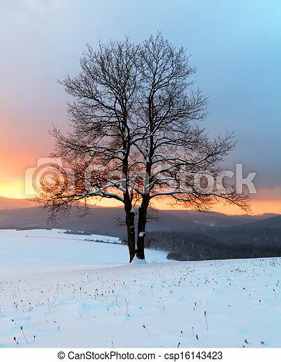 natureza inverno, -, paisagem árvore, sozinha, amanhecer - csp16143423