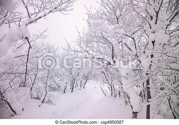 natureza, vista - csp4950587