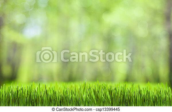 naturlig, fjäder, abstrakt, grönt skog, bakgrund - csp13399445