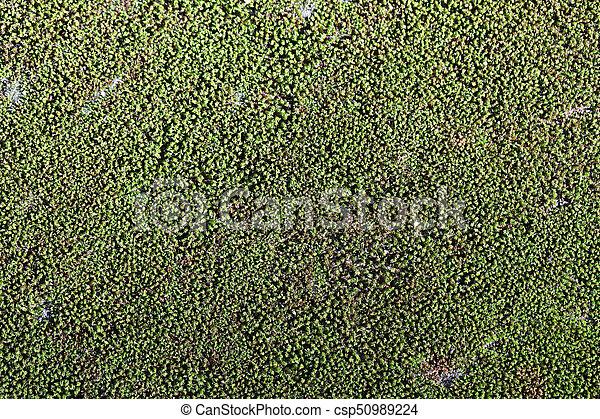 natuurlijke , mos, work., natuur, oppervlakte, groene achtergrond, rots, ontwerp, jouw - csp50989224