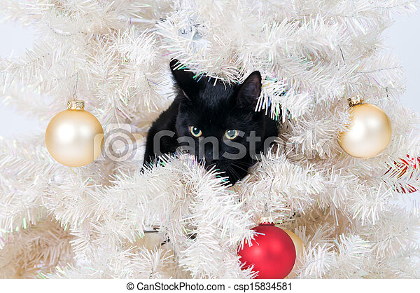 naughty christmas cat csp15834581