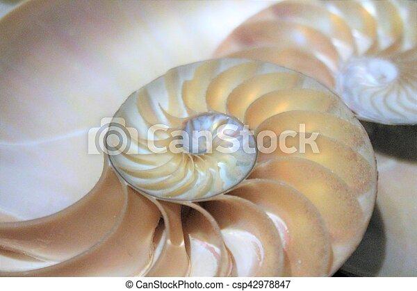 nautile, modèle, section, croix, coquille, fibonacci, mer - csp42978847
